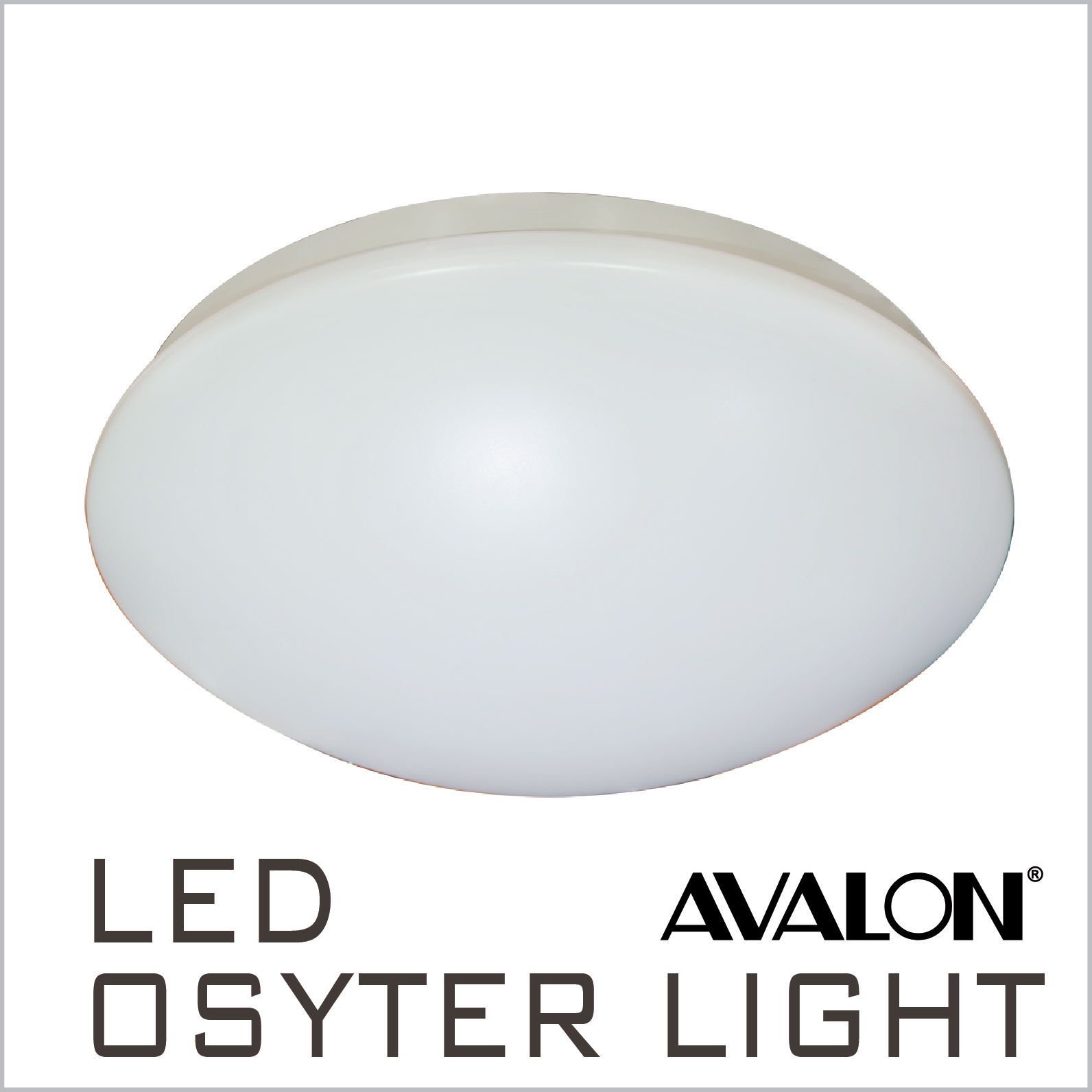 LED Osyter Light